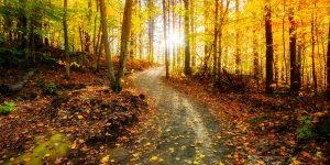 Beautiful woodland walk in Limerick - Maldron Hotel Limerick